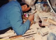 Production of narigoma.